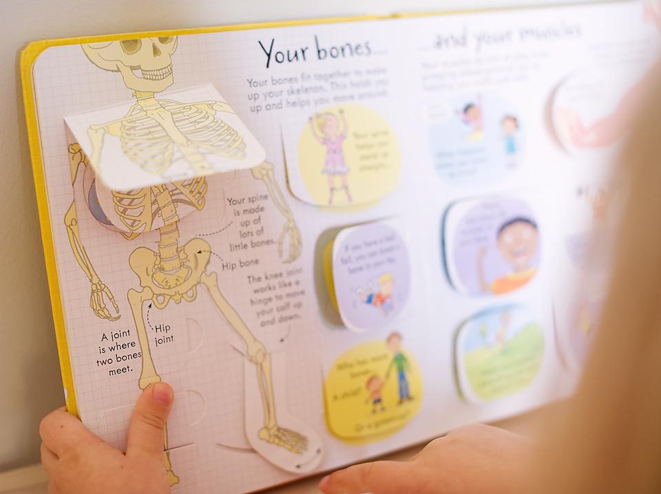 The Human Body: Bones