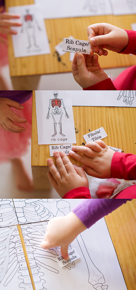 The Human Body: Bones   Happiness is here
