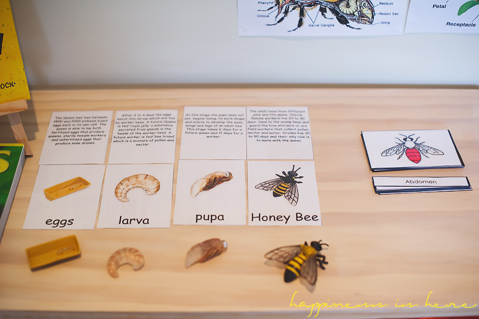 A child-led project: Honey bees | Happiness is here