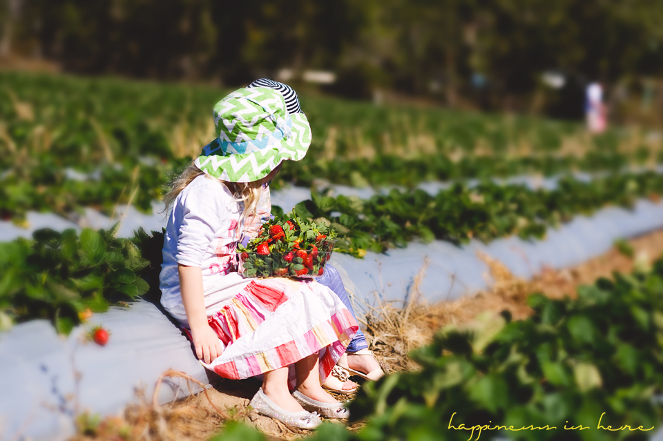 Strawberry Farm field trip | Happiness is here