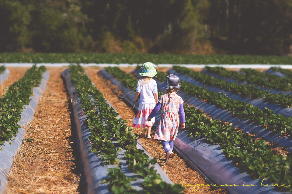 Strawberry Farm field trip| Happiness is here