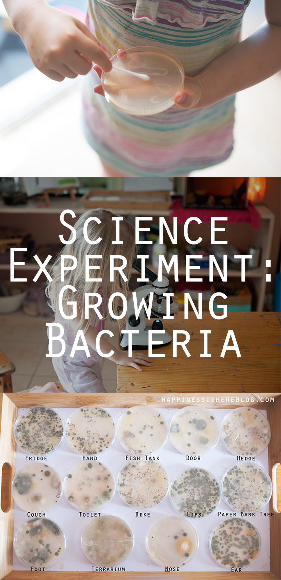 Science: Growing Bacteria