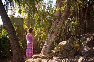Unschooling Tree Study